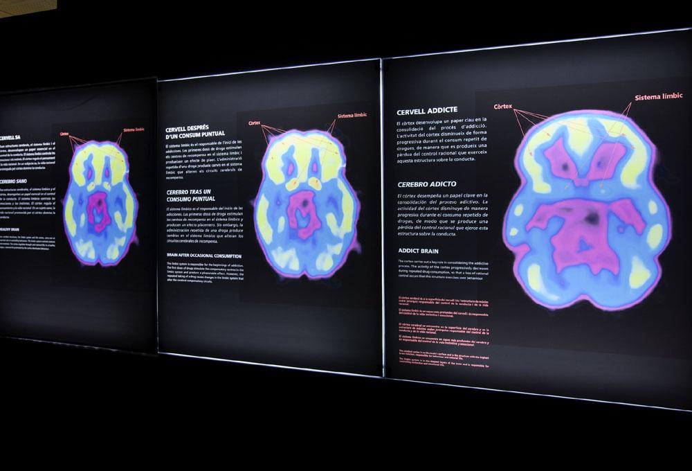 una-de-las-areas-de-la-exposicion-es-las-drogas-y-el-cerebro