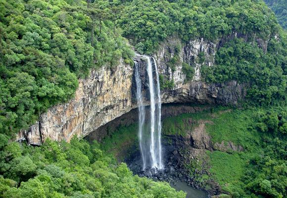 selva brasil