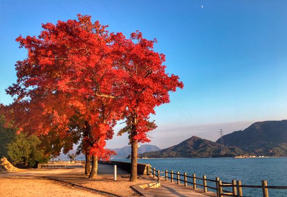 paseo isla okunoshima