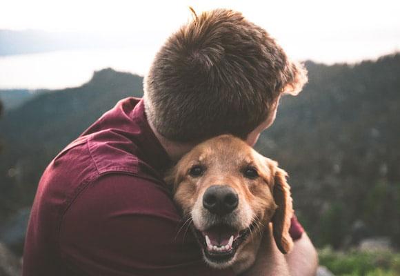 Mascotas perro