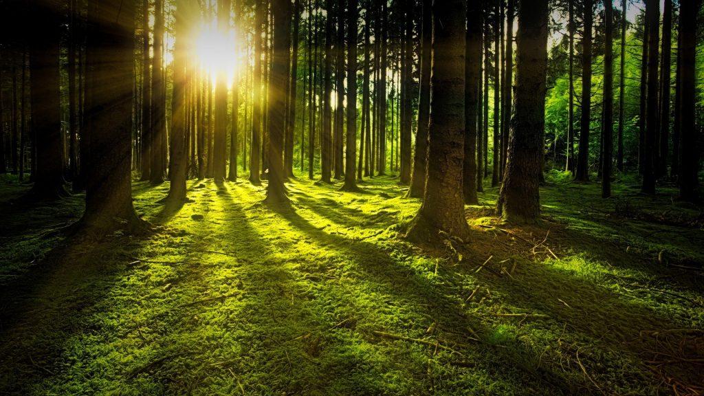 Naturaleza bosque luz