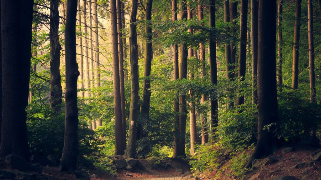 bosque naturaleza