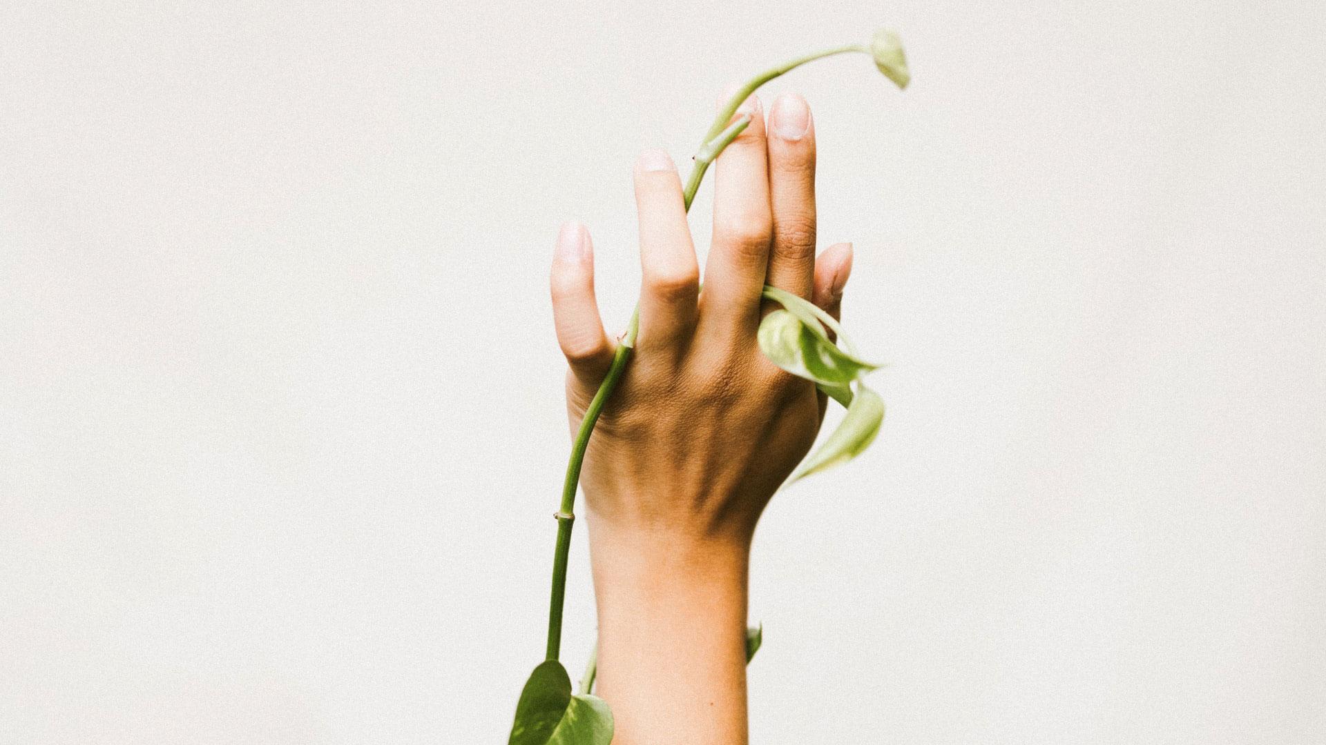 manos primavera