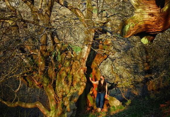 Naturaleza bosque Asturias Paradores