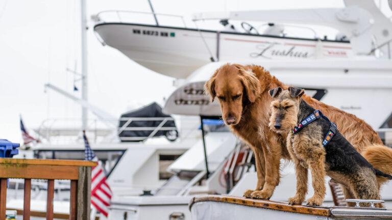 perros viajar